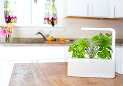 Click and Grow Herb Garden